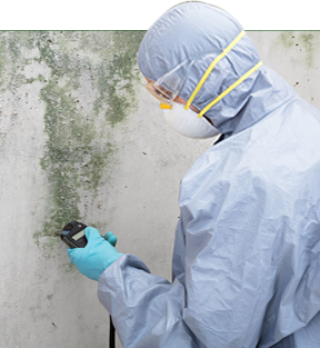 Finer Options for the Best Mold Remediation