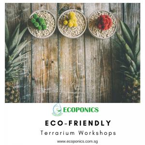 How to create a fundamental Terrarium
