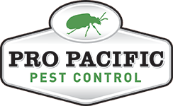 Top 3 best pest control service in Southend