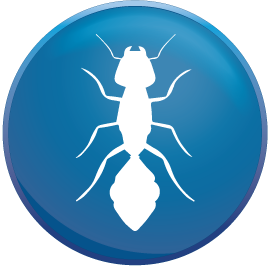 Top 3 best pest controls in Colchester